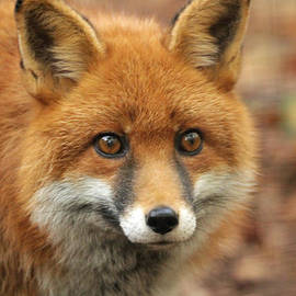 Martyn Bennett - Elle The Red Fox
