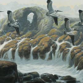 Marte Thompson - Farallon Pelicans