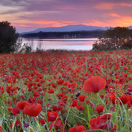Guido Montanes Castillo - Field of poppies at the lake