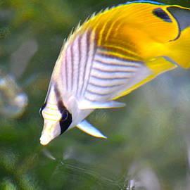 Lehua Pekelo-Stearns - Fish in the sunlight