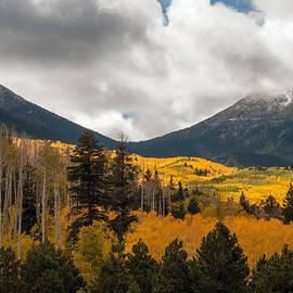 Tam Ryan - Flagstaff Fall Color