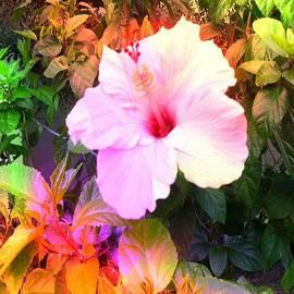 Iris Gelbart - Floral Heaven