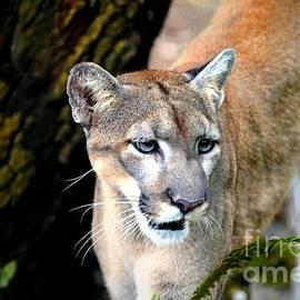 Randy Matthews - Florida Panther 6