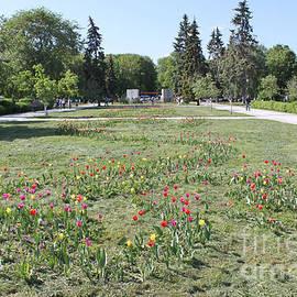 Evgeny Pisarev - Flowers in spring