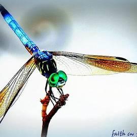 Faith Williams - Fly Dragon