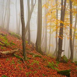 Milan Gonda - Foggy Forest