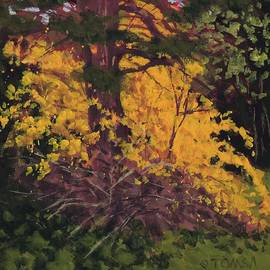Bill Tomsa - Forsythia and Pine