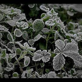 Marija Djedovic - Frost