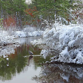 Daniel Myers - Great Blue Heron in Winter One