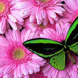 Garry Gay - Green Butterfly Resting