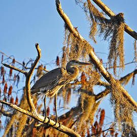 Al Powell Photography USA - Heron On High