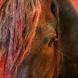 Mark Ashkenazi - Horse
