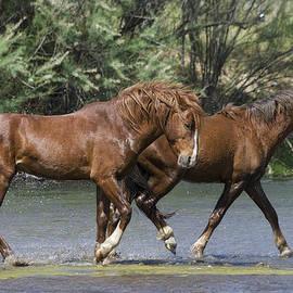 Saija  Lehtonen - Horse Play