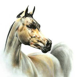 Tamer and Cindy Elsharouni - Horse Portrait