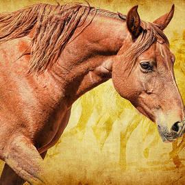 Steve McKinzie - Horses