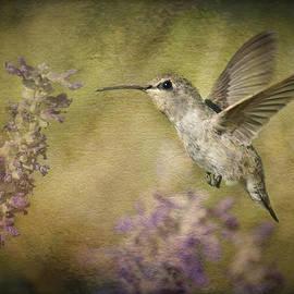 Saija  Lehtonen - Hummingbird