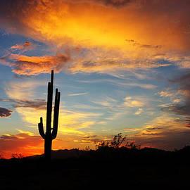 Saija  Lehtonen - In the Shadow of the Saguaro