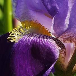Bruce Bley - Iris Up Close