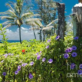 Sharon Mau - Keanae Maui Hawaii