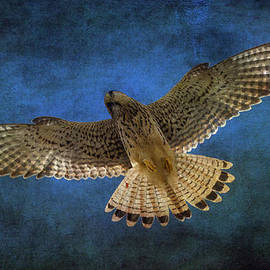 Chris Smith - Kestrel