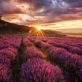 Evgeni Ivanov - Lavender dawn