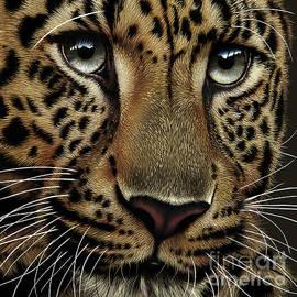 Jurek Zamoyski - Leopard