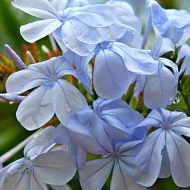 Clare Bevan - Light Blue