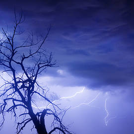 James BO  Insogna - Lightning Tree Silhouette 29