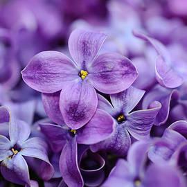 Roksana Bashyrova - Lilac flowers background