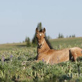 Wildlife Fine Art - Lupine Meadow