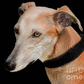 Linsey Williams - Lurcher