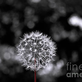 Colleen Kammerer - Make A Wish