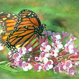 Elizabeth Winter - Monarch butterfly