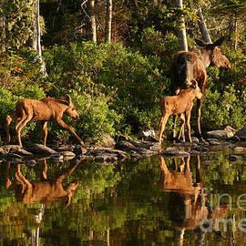 Jeannette Hunt - Moose Family