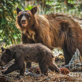 Mitch Shindelbower - Mother And Cub