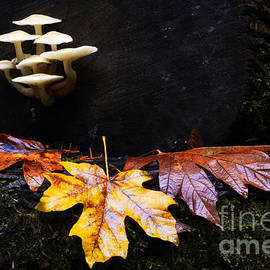 Bob Christopher - Mushrooms In Autumn
