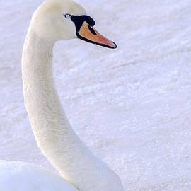 LeeAnn McLaneGoetz McLaneGoetzStudioLLCcom - Mute Swan on Ice