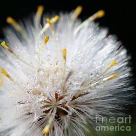 Gregory DUBUS - Nature microscopic world beauty