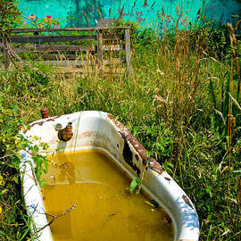 Amy Cicconi - Old Bathtub Near Painted Barn