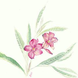 Karen Rispin - Oleander flowers