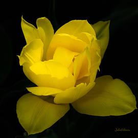 Julie Palencia - One Yellow Tulip