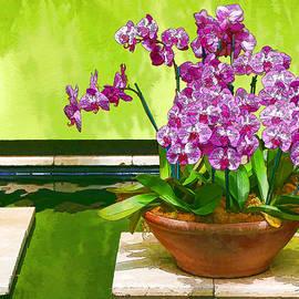 Allen Beatty - Orchid Still Life