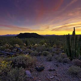 Saija  Lehtonen - Organ Pipe Cactus Sunset