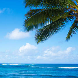 Elena Chukhlebova - Palm leaves over ocean