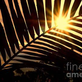 Kaye Menner - Palm Sunset by Kaye Menner
