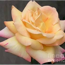 Maxine Bochnia - Peace Rose