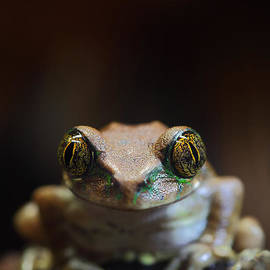 Brandon Alms - Peacock Tree Frog