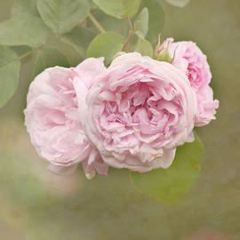 Kim Hojnacki - Pink Blush
