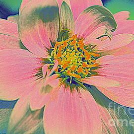 Photographic Art and Design by Dora Sofia Caputo - Pink Dahlia Pop Art