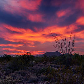 Saija  Lehtonen - Pink Desert Skies
